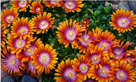 Merveilleux Spokane Area: Pay Only $10 For $20 Worth Of Plants And Flowers At Tower  Perennial Gardens!